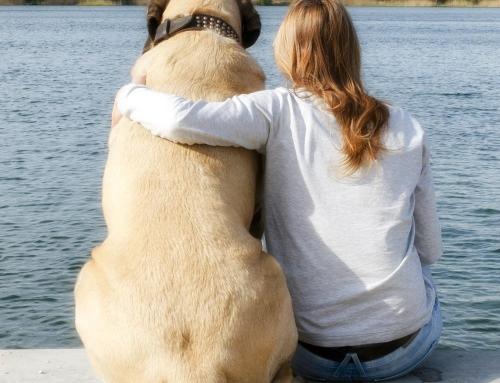 Mede dankzij Dogtrust heb ik een leuke hond