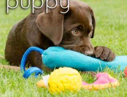 Recensie puppytraining Dogtrust