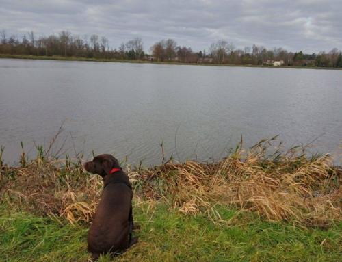 De training bij Dogtrust by Noëlle werpt zijn vruchten af