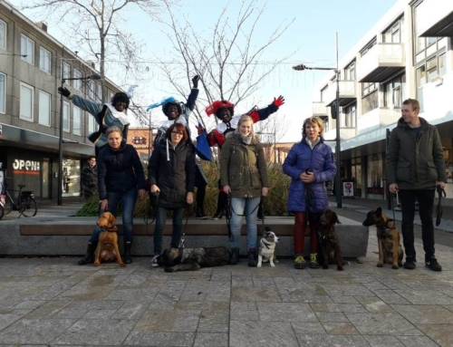 Zwarte pieten verrassen puppy's Dogtrust Valkenswaard