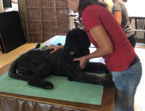 Diploma sportmassage voor honden