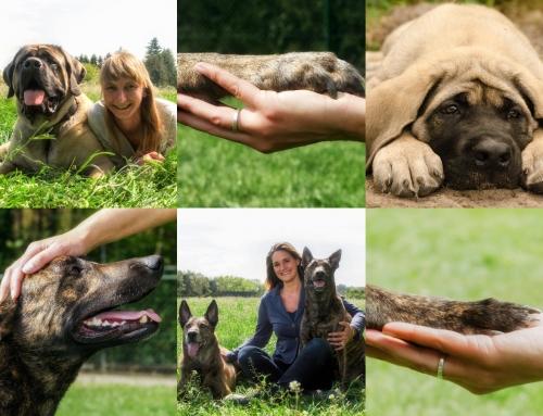Dogtrust bestaat 20 jaar!